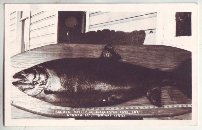 P860 1945 large salmon caught charleston lake ontario, 39'', 29 1/2 lbs