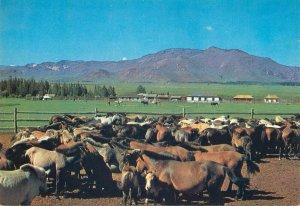 Mongolia a village community centre Tsetserlig Somon Hubsugul Aimak postcard