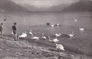 Switzerland Lausanne Lac Leman Swans Photo
