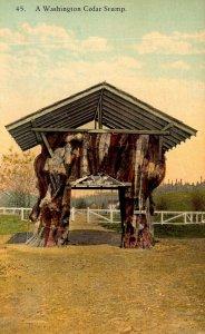 Washington Spokane A Washington Cedar Stump