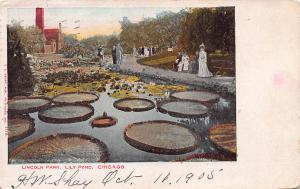 Lincoln Park, Lily Pond, Chicago, Illinois, Early Postcard, Used in 1905