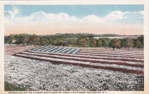 New York Rochester Astor Flag Flowerr Seed Farm James Vick's Sons sk6207