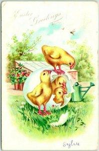 Vintage 1906 EASTER GREETINGS Embossed Postcard 2 baby Chicks in One Egg TUCK'S
