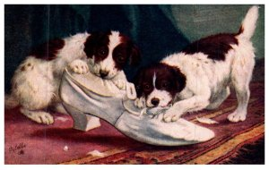 Dog   Spaniels chewing shoes