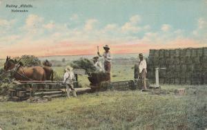 Horses and Men - Baling Alfalfa in Nebraska - Agriculture - pm 1912 - DB