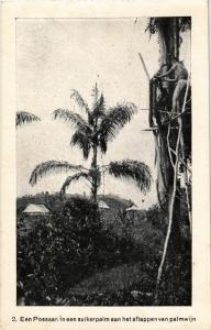 CPA Een Possaan in een suikerpal aan het aftappen INDONESIA (565928)