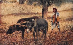 A Peasant of Palestine Donkeys Animals Postcard