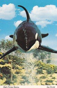 Killer Whale , SHAMU , SEAWORLD , San Diego , California , 50-70s