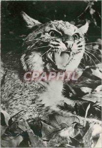 Modern Postcard Lynx Advertisement Genoline