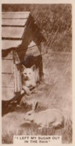 Cat Sleeping In Kennel With Rabbit German Real Photo Cigarette Card