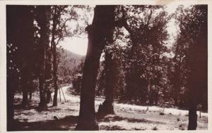 RP: Ifrane , Morocco , 20-30s ; Route d'Azrou