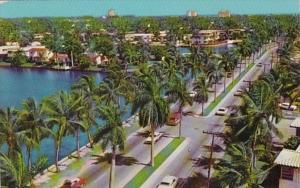 Florida Fort Lauderdale Palm Lined Las Olas Boulevard