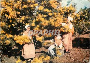 Postcard Modern Academy Provencale Cannes Provence Collection Section Lower M...