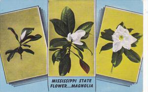 Mississippi State Flower The Magnolia