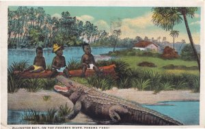Alligator Bait Panama Canal Barbados Old African Postcard