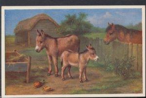 Animals Postcard - Farmyard Animals - Donkeys and a Horse  DC2456