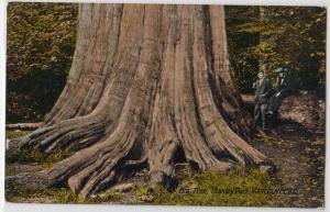 Big Tree, Stanley Park, Vancouver BC