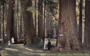 SANTA CRUZ, California, 1900-1910s; Jumbo And Giant, Big Tree Grove