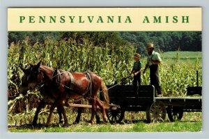 PA- Pennsylvania, Driving the Wagon, Pennsylvania Amish, Chrome Postcard