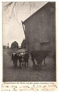 Connecticut Canterbury , trained Steers by Walter and Milo Appley, DPO 1 Sout...