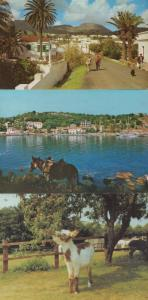 Devon Donkey Sanctuary Lanzarote Corfu 3x Donkeys Postcard