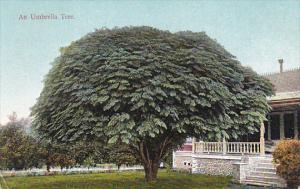 An Umbrella Tree