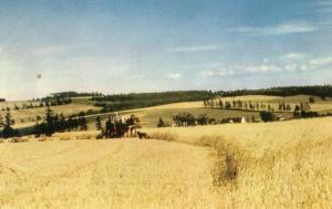 Canada - Prince Edward Island. Harvest Time