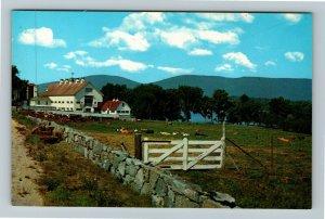 Center Harbor NH- New Hampshire Longwood Dairy Farm Pastured Cow Chrome Postcard
