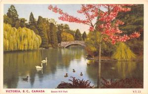 B5488 Victoria Canada Beacon Hill Park Swan