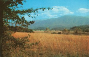 Postcard Cades Cove Great Smoky Mountians