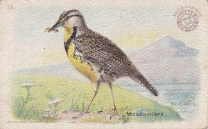 Meadowlark - Useful Birds 1915 - Arm & Hammer Trade Card