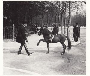 French Horse Training Street Riding in 1912 Equestrian Photo Postcard