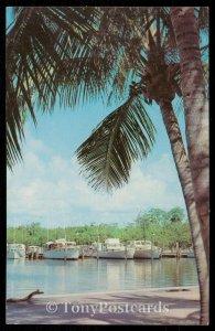 Florida Yacht Basin