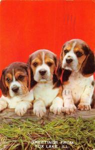 FOX LAKE ILLINOIS PUPPIES GREETING FROM POSTCARD 1961