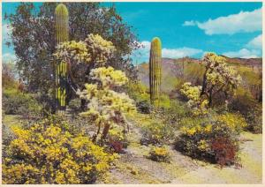 Arizona Desert Springtime Scene
