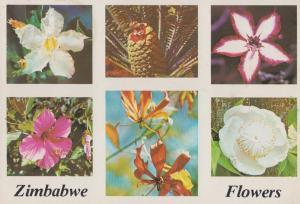 Zimbabwe Flowers White Sabi Star Cycad Hibiscus South African Postcard