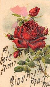 H11/ Blooming Prairie Minnesota Postcard c1910 A Note Greetings from