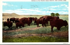 Oklahoma Buffalo On The Wichita Game Reserve Near Lawton 1956 Curteich
