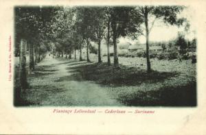suriname, Plantation Leliendaal, Cederlaan (1899)