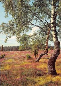 Lueneburger Heide Natural Park Trees Landscape