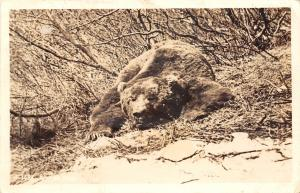 Real Photo Postcard~Bear Sprawled Out in Woods~1940s RPPC