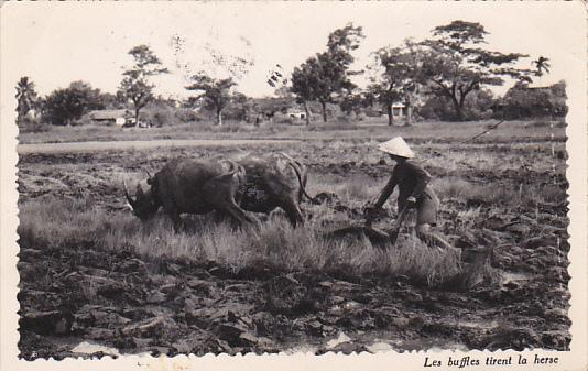 Viet Nam Indochina Saigon Man Plowing Field With Oxen 1952 Real Photo
