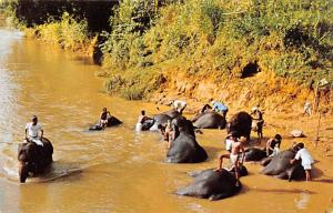 Katugastota Ceylon, Ceylan Elephants Bathing in the Mahaweli Ganga Katugastot...
