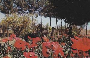 Public Garden , KERMAN , Iran , 40-60s