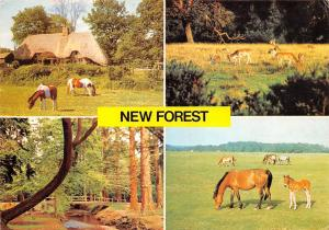 Hampshire New Forest, Ornamental Drive, Deer, Ponies, National Park