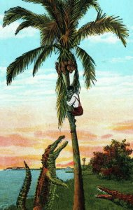 Honey Come Down I'm Waiting For You in Floriday Man In Palm Tree Alligators
