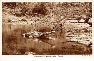 Alligators Crocodile Murchison Falls, Uganda Writing on back