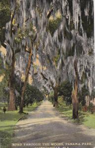 Road Through The Woods, Panama Park, JACKSONVILLE, Florida, 1900-1910s