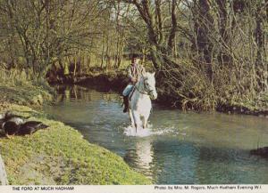 Much Hadham Horse Riding Jumping Herts Hertfordshire Race Galloping Postcard