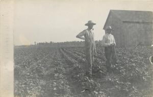 Real Photo Postcard~Farmers, Skinny & Short Stand in George's Bean Field~1907-18